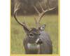 Wildlife Insurance Underwriters, LLC